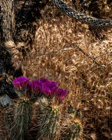 """Cautious Ladies"" (Crosscut Trail, Superstition Mountains, Tonto National Forest, Arizona"
