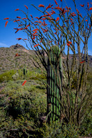 """Embrace"" (Southern foothills of Pass Mountain, Tonto National Forest, Arizona"