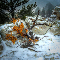"""Storm Still Life"" (Ute Valley, Colorado Springs)"