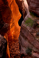 Channel in sandstone, Echo Canyon, Zion National Park