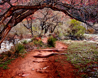 Trail along the Virgin River, Zion National Park