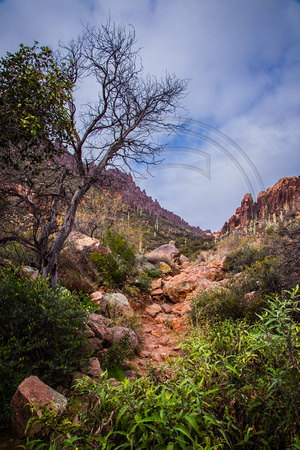 Lower Peralta Canyon Trail, Superstition Wilderness Area, Tonto National Forest, Arizona
