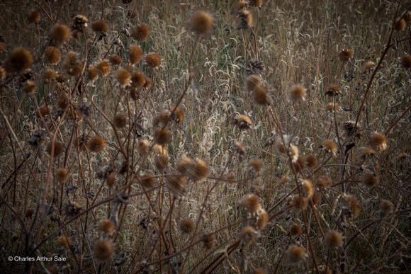 """Behind the Thistles"" (Ute Valley, Colorado Springs)"