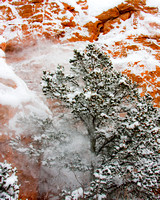 High winds blowing snow from trees in the Garden of the Gods